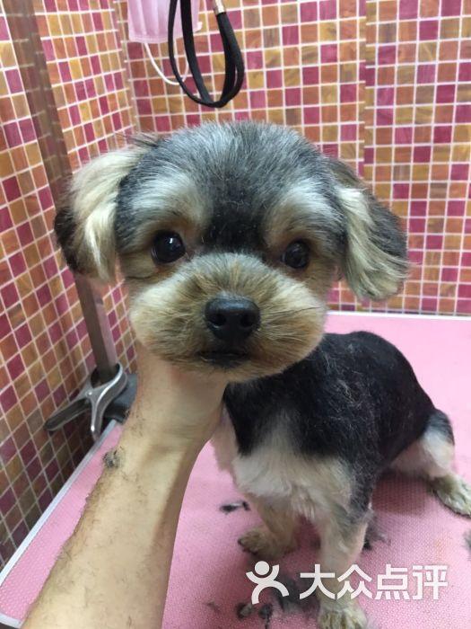107萌宠造型工作室-图片-上海宠物