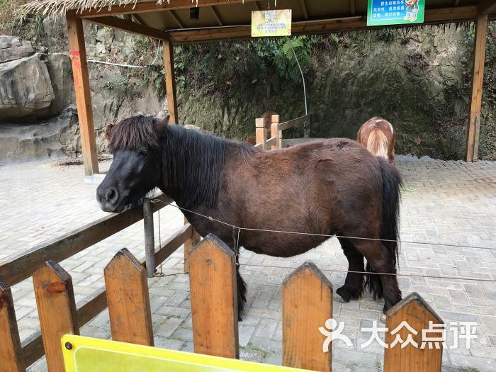 温州动物园图片 - 第7张
