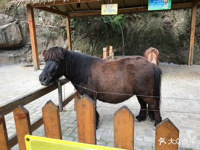 温州动物园图片 - 第204张