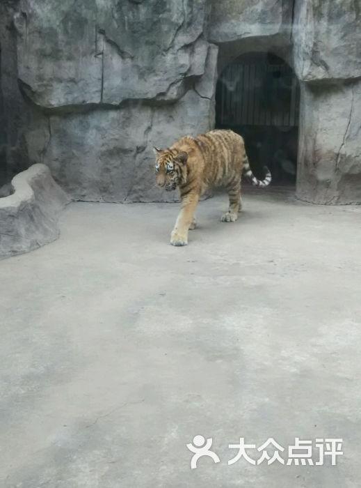 南昌新动物园-图片-南昌周边游-大众点评网