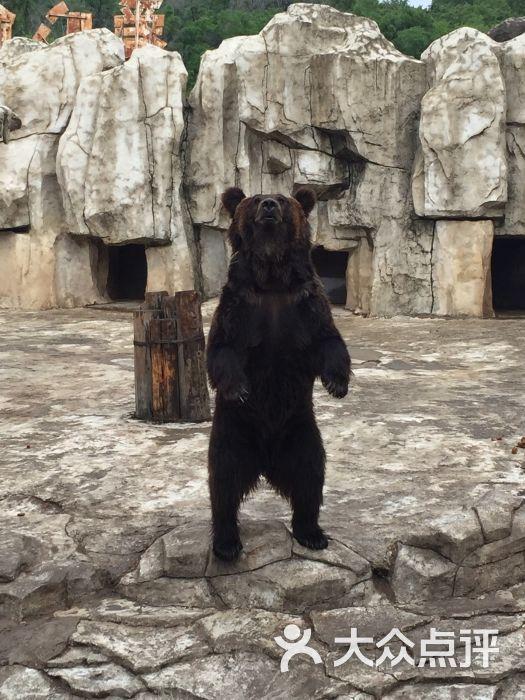 沈阳森林野生动物园的点评