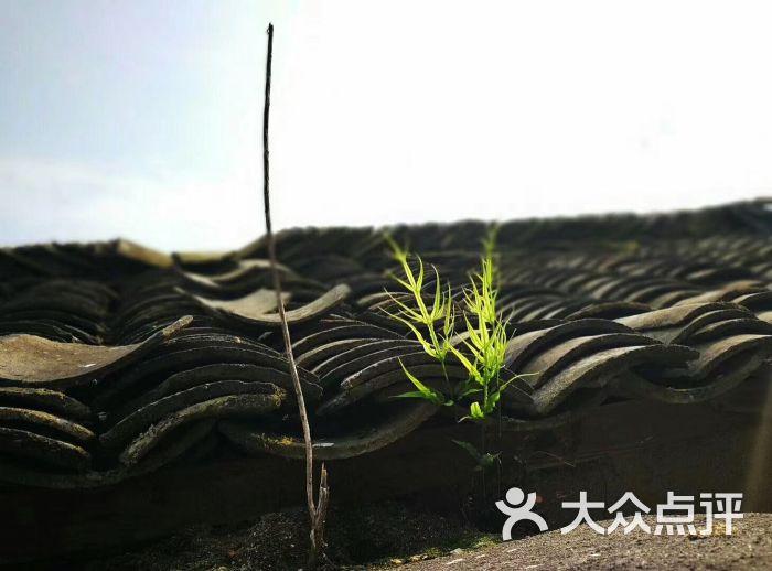 朱旺景区图片 - 第10张