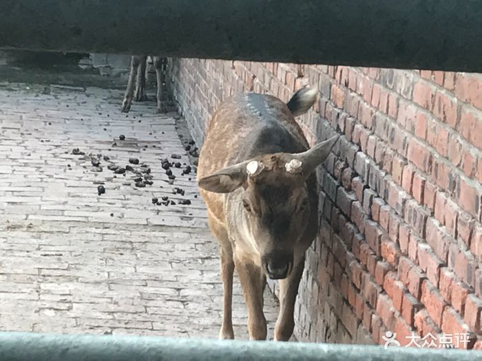 丛台公园动物园-图片-邯郸周边游-大众点评网