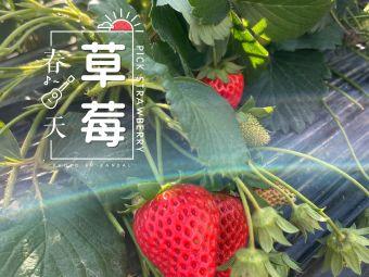 美林湖大型草莓园