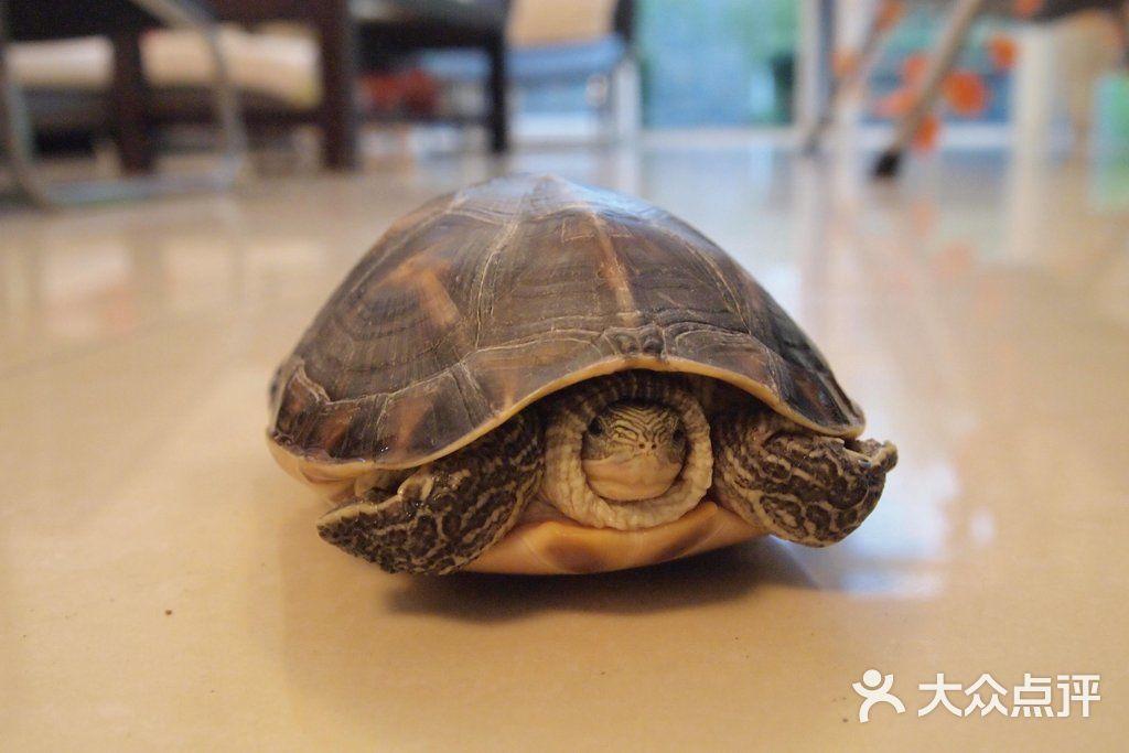 homelike乌龟-别墅派对别墅聚会班级聚会的图片-大众