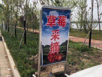 奶油草莓生态采摘园