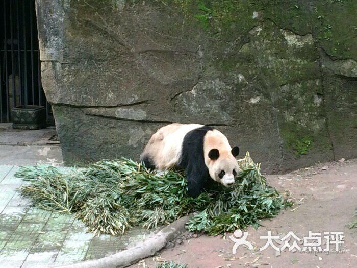重庆动物园-图片-重庆周边游-大众点评网