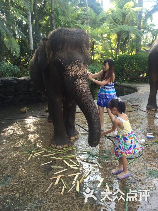 大象野生动物园寄宿酒店-给大象洗澡图片-巴厘岛酒店