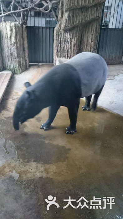 北京动物园图片 - 第6张