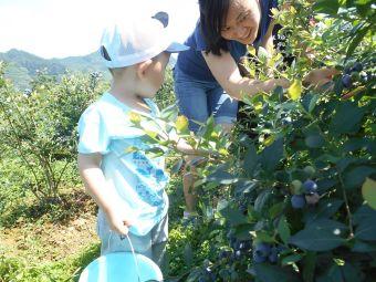 金佛西蓝莓种植采摘基地
