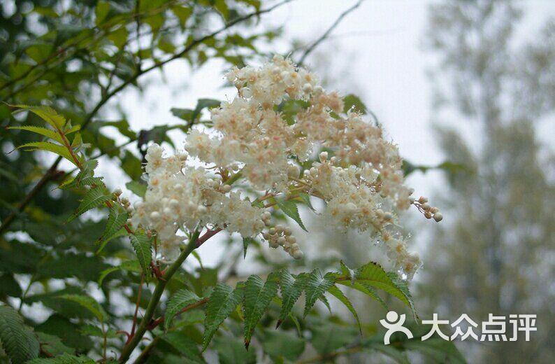 五台山风景区-图片-五台县周边游-大众点评网