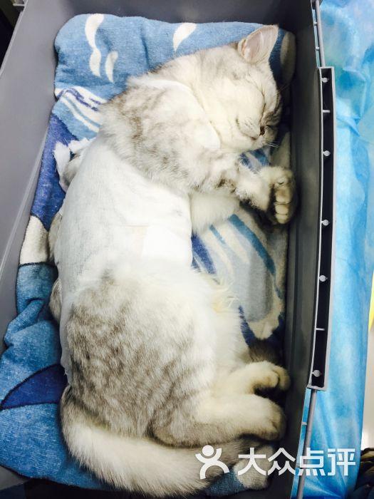 纳吉亚动物诊所-图片-北京宠物-大众点评网