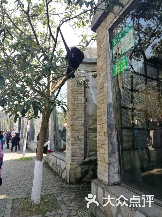 贵阳森林野生动物园图片 - 第10张