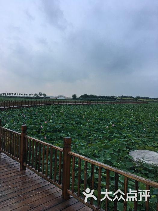 东丽湖风景区-图片-天津周边游-大众点评网