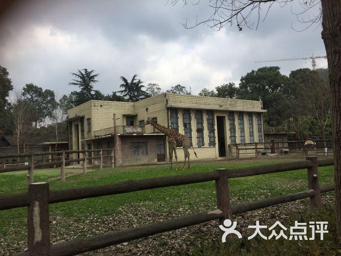 成都动物园景点图片 - 第27张