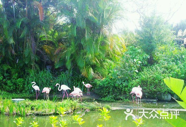 东莞寮步香市动物园图片 - 第6张