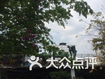 五桂樱桃采摘节