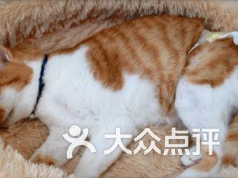 宠物语专业宠物殡葬火化礼仪服务
