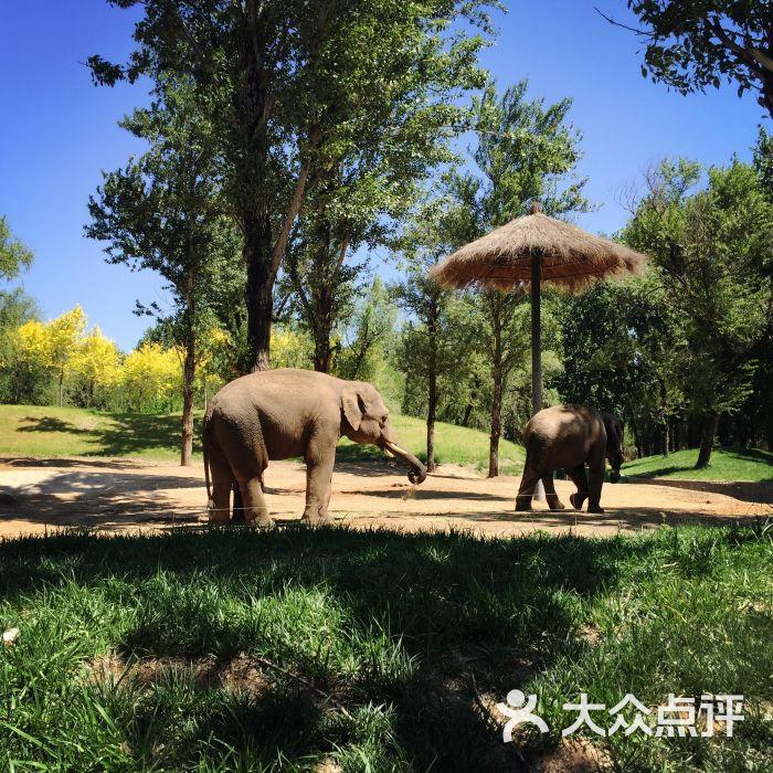北京野生动物园的全部评价(第23页)-北京-大众点评网