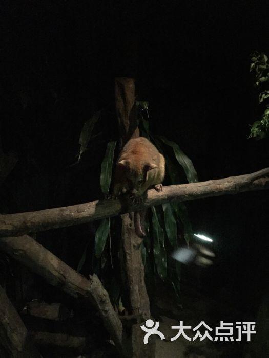 夜间野生动物园-图片-新加坡景点-大众点评网