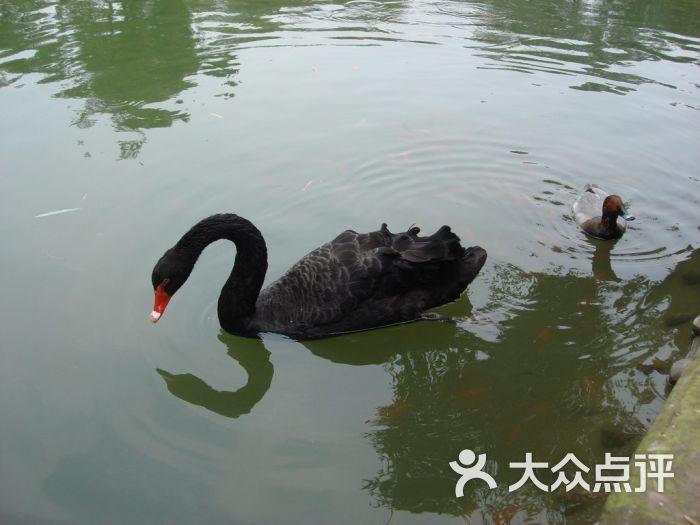 成都动物园景点图片 - 第4235张