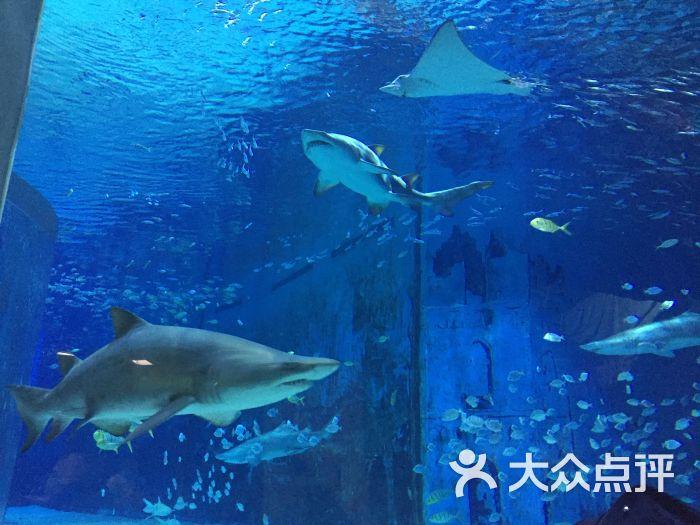 北京动物园景点海洋馆图片 - 第1张