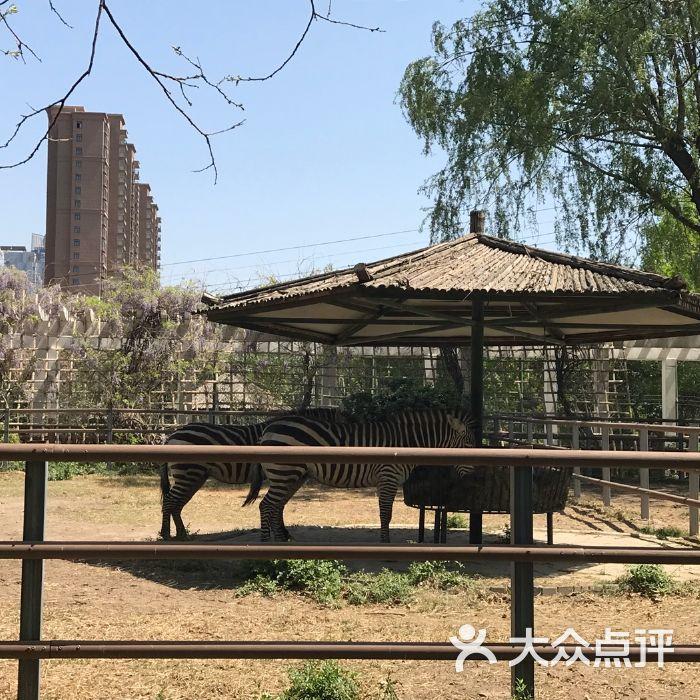 郑州动物园图片-北京动物园-大众点评网