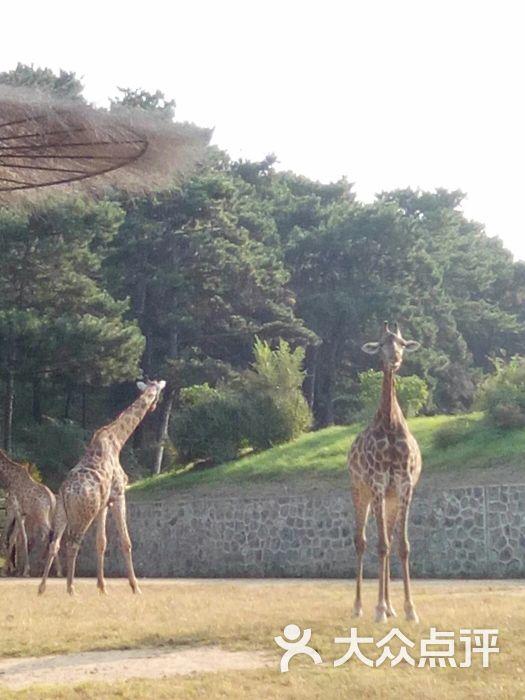 沈阳森林动物园图片 - 第3张