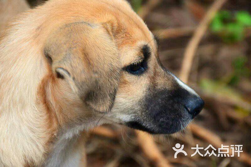 爱之家流浪动物救助中心图片 - 第3张