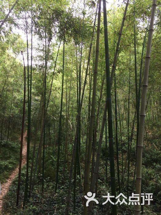 壁纸 风景 森林 植物 桌面 525_700 竖版 竖屏 手机