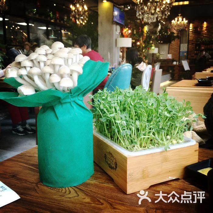 九牛二户(西藏南路店)活体蔬菜图片 - 第4张