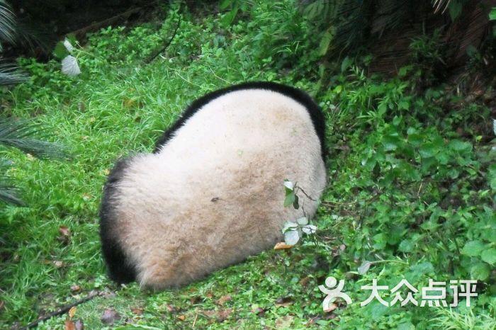 桂林动物园图片 - 第3张