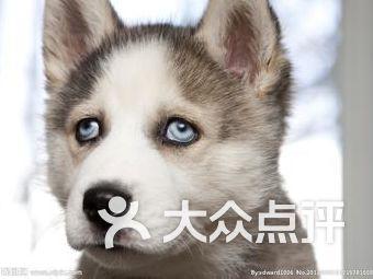 宝宝爱狗狗宠物店