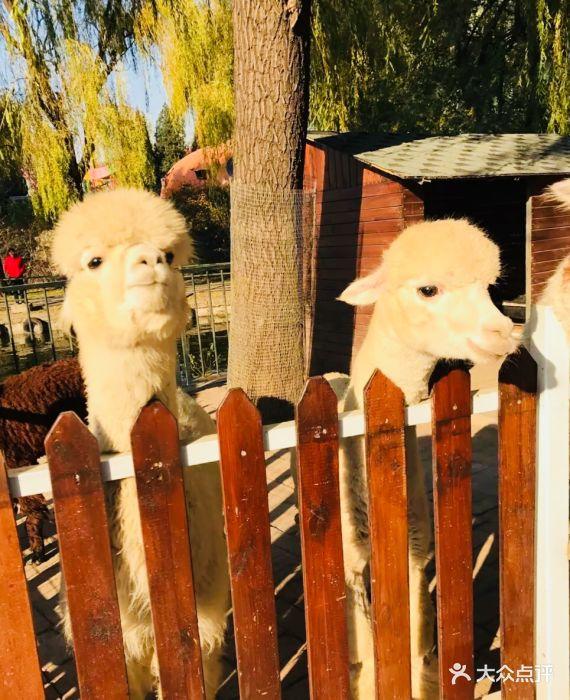 朝阳公园亲子动物园图片 - 第898张