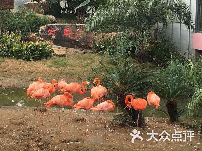 无锡动物园·太湖欢乐园图片 - 第8张