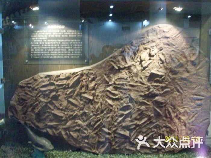 中国古动物馆鱼化石图片 - 第21张