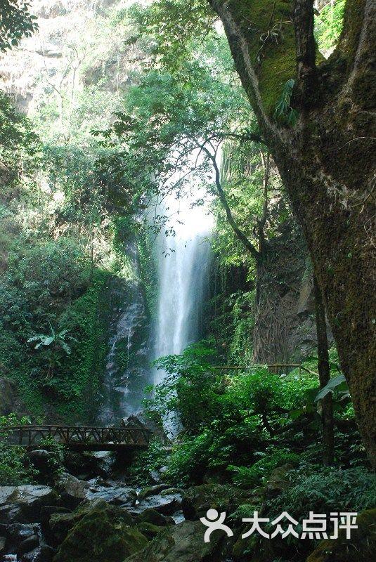 莫里热带雨林风景区莫里热带雨林图片 - 第330张