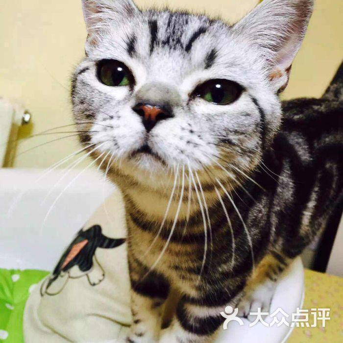 楼上的猫咖啡-美食-青岛美食-大众点评网后半夜吉林图片图片