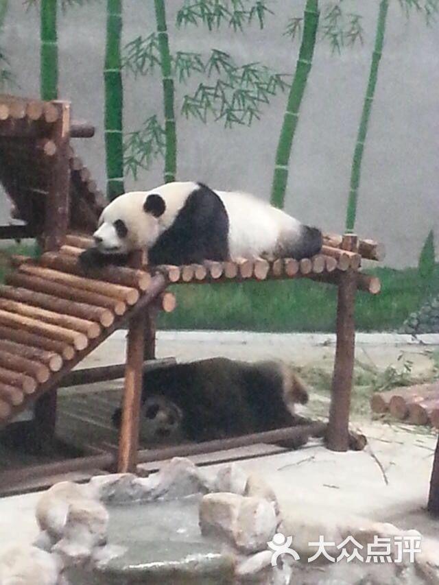 光合谷动物园--其他图片-天津景点-大众点评网