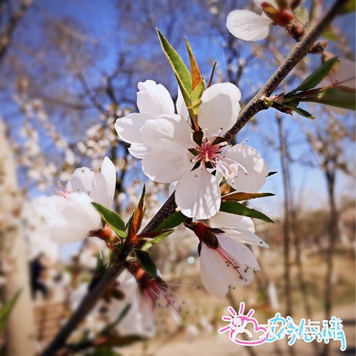 桃花堤公园-图片-天津景点-大众点评网