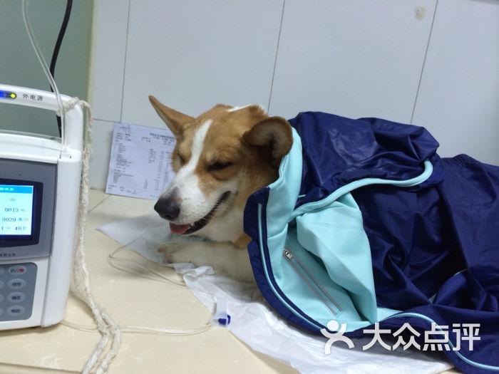 北京美联众合京西动物医院