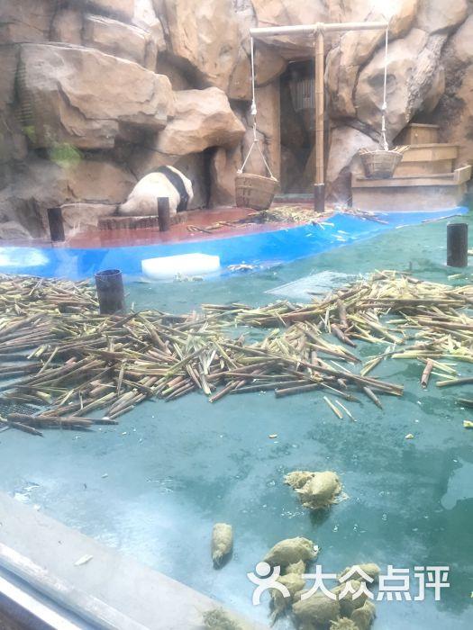 成都动物园图片 - 第31张