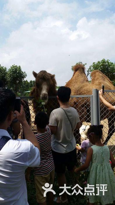 东莞寮步香市动物园图片 - 第19张