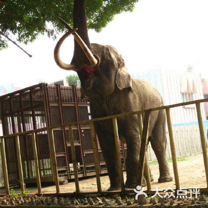 天津动物园狮虎管图片-北京动物园-大众点评网