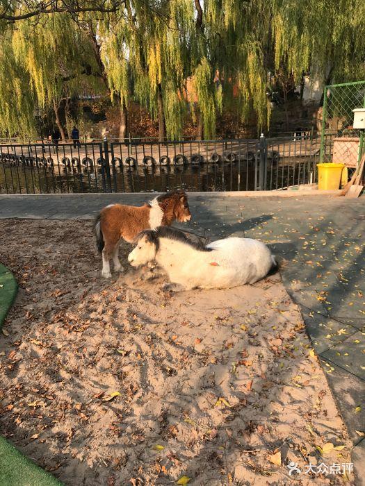 朝阳公园亲子动物园图片 - 第18张