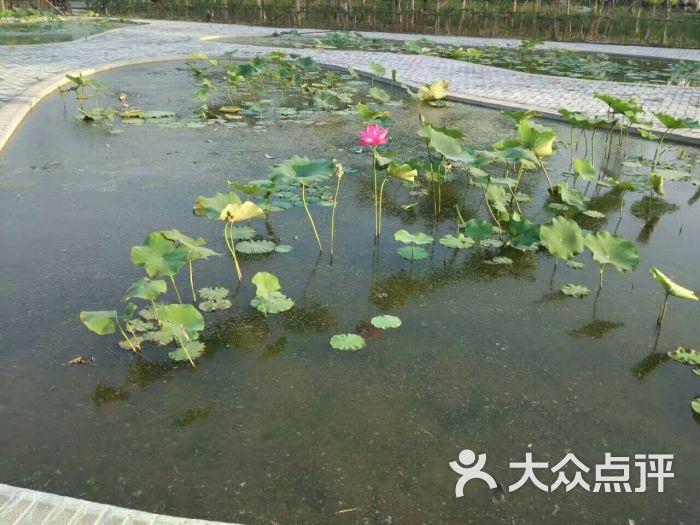 东营植物园图片 - 第4张