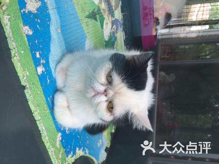 北京动物园_唐朝的宇宙飞船