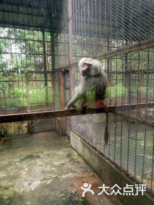 东莞寮步香市动物园图片 - 第332张