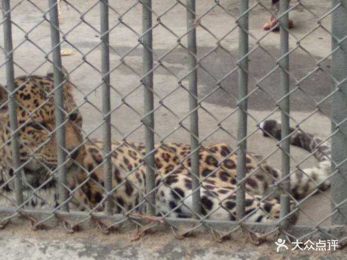 渭滨公园动物园图片 - 第4张