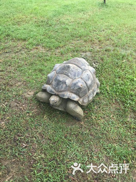 海口天鹅湖动物乐园图片 - 第69张